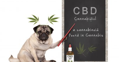 One Chart Shows Why CBD Use is Soaring
